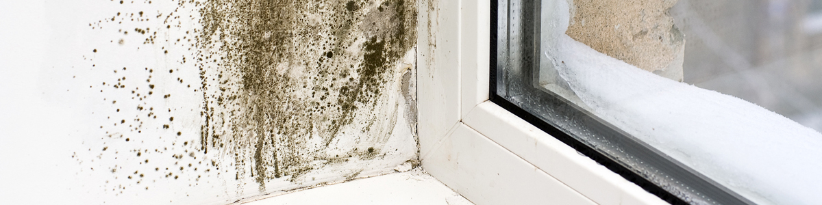 Mould on window